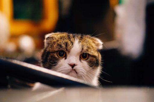 Котам не нужен перфекционизм, у них лапки